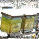 winter beekeeping hives in snow
