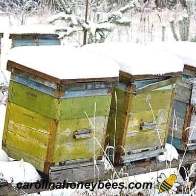 Beekeeping in Winter -Beekeeper Tasks