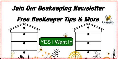 beekeeper newsletter