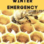 honey bee worker feeding from comb - feeding bees winter emergency
