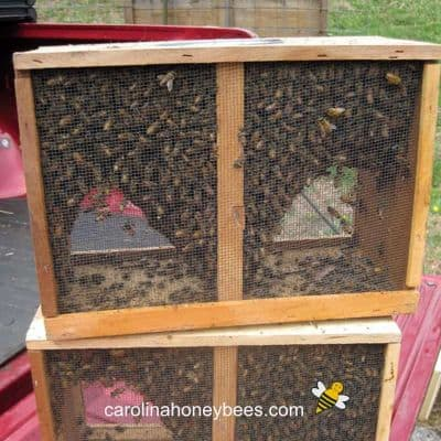 Is Buying Bee Packages a Good Investment?