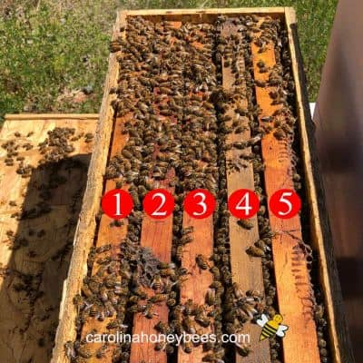 image of a 5 frame nuc of honey bees in a box