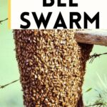large bee swarm on post - attracting a bee swarm