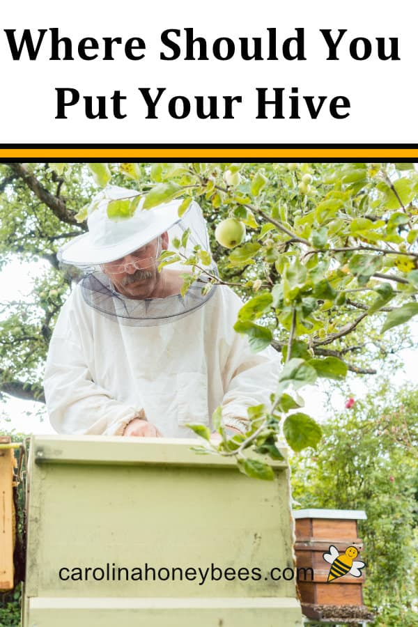 beekeeper inspecting beehive-where should you put your hive