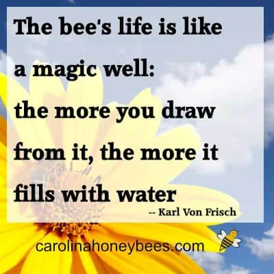 sunflower and bee with karl frisch quote about bee life