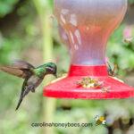 humming bird and bees at feeder