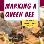 image of a marked queen bee leaving a marking tube
