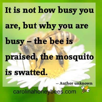 Common quote about busy bees image.