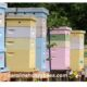row of colorful hives in a nectar dearth
