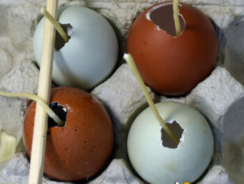 making egg shaped candles with beeswax