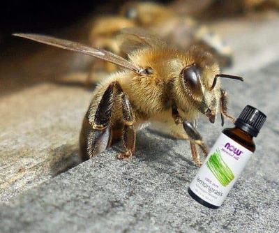 honey bee with essential oil