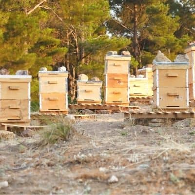 various types of bee hives