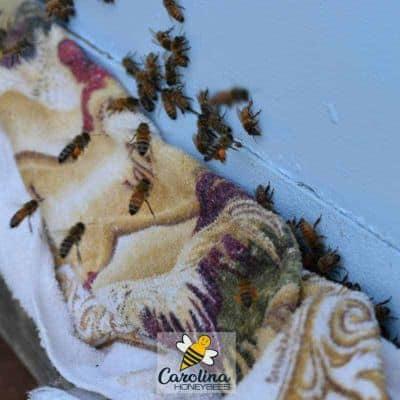 Closed bee hive entrance for oxalic acid vaporization treatment image.