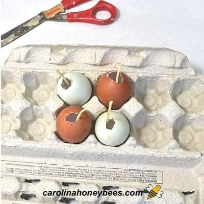 image of empty egg shell with cotton wicks inserted sitting in an open egg crate