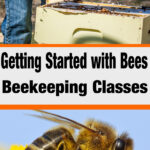 beekeeping inspecting a beehive - honey bee - getting started with bees beekeeping classes