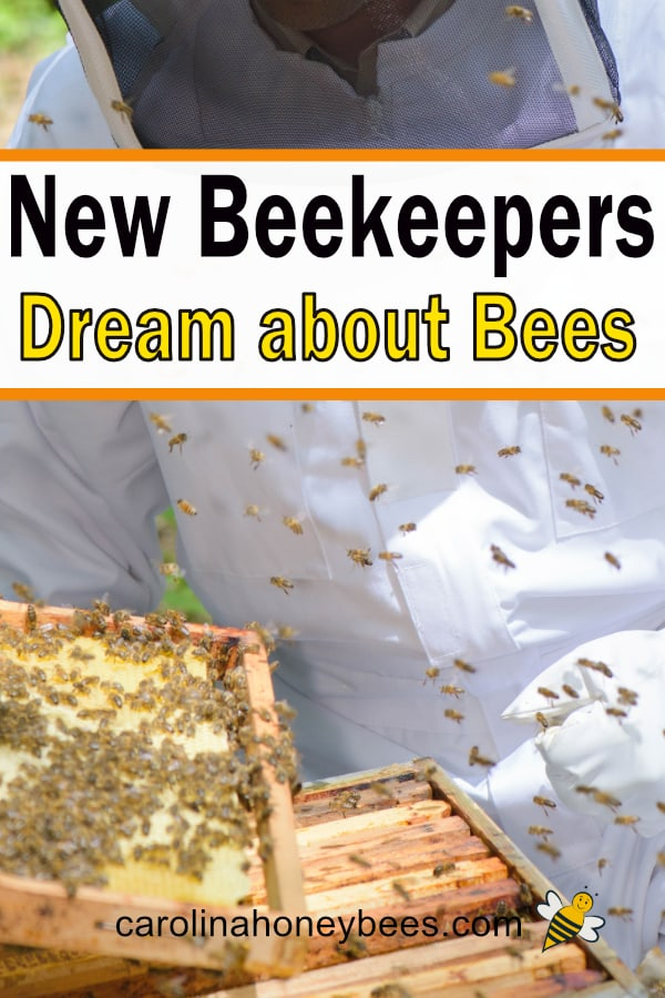 beekeeper with open beehive - new beekeepers dream about bees