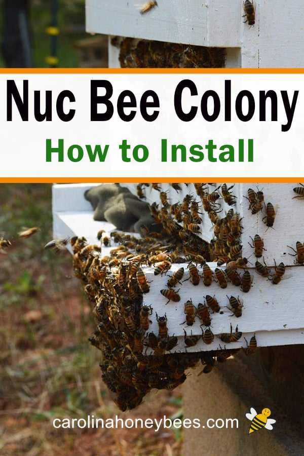 nucleus bee hive - nuc bee colony how to install