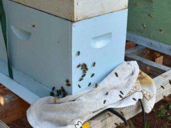 beehive undergoing oxalic acid vaporization