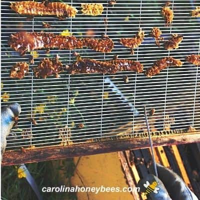 Burr comb on a wire queen excluder image.