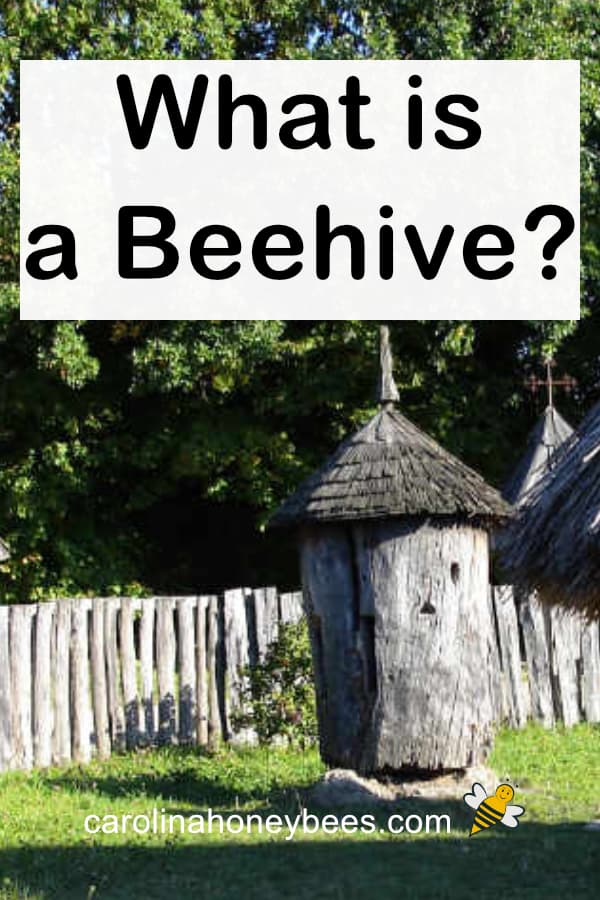 old world beehive in a tree