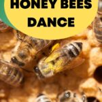 picture of dancing honey bee with pollen inside hive