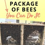 package of bees sitting on top of beehive during installation