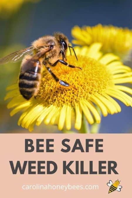 bee on flower - bee safe weed killer