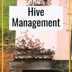 honey bee hive - keeping bees and hive management