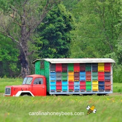 picture of colorful hives on a truck for moving to new location