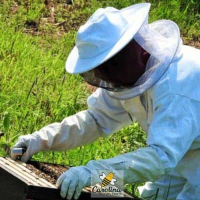 beekeeper looking at hive for possible splitting a hive