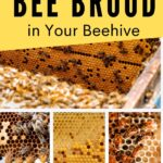 picture of different kinds of bee brood in a beehive