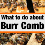 Excess comb construction inside a beehive - what to do about burr comb image.