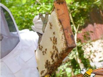 Tips to making honey harvesting from a beehive easier