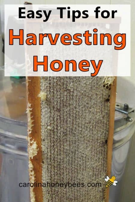 frame of honey - tips for harvesting honey