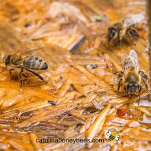 How to Provide Drinking Water for Bees - Carolina Honeybees
