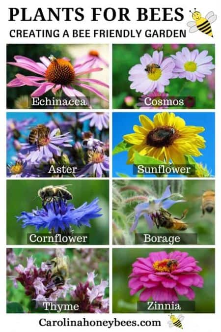Picture of flowers suitable to use in a bee garden.