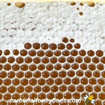 Honey in the comb that has been capped image.
