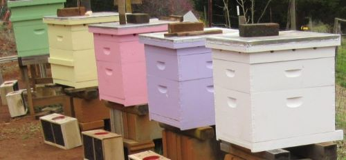 picture of a row of langstroth hives painted in pastel colors