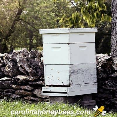 picture of a standard langstroth beehive painted white