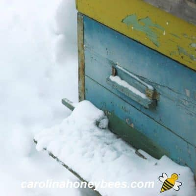 Entrance to a beehive blocked with snow image.