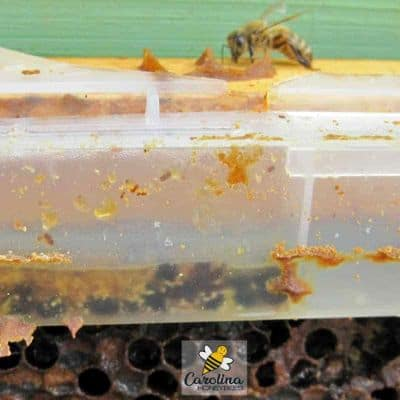 small hive beetle trap located inside a hive