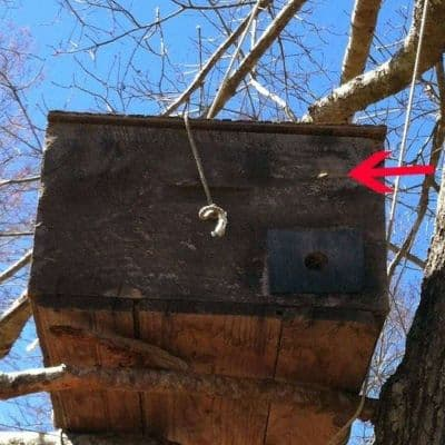 Honey bee scouts investigating new bait hive image.
