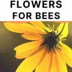 single yellow flower - best fall flowers for bees
