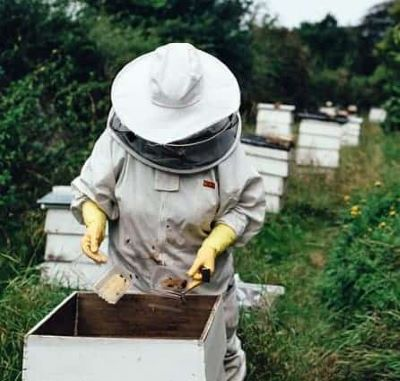 beekeeper starting to feed bees for winter
