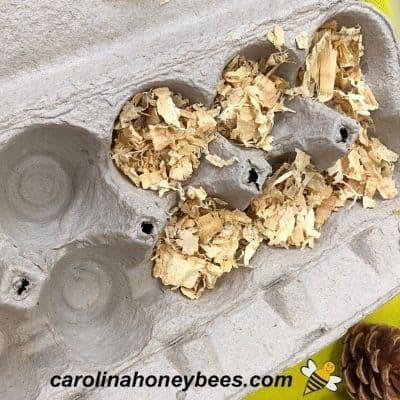 cardboard egg carton with shavings