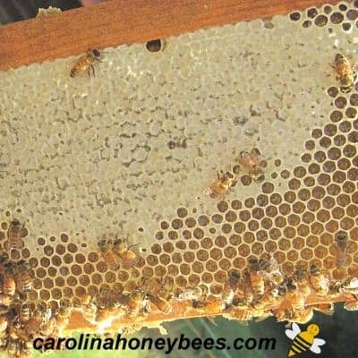 beeswax in a comb - cappings