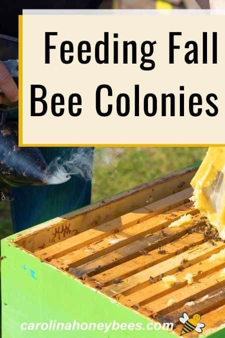 open beehive - feeding fall bee colonies