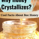 crystallized honey in a jar - do you know why honey crystallizes-cool facts about bee honey