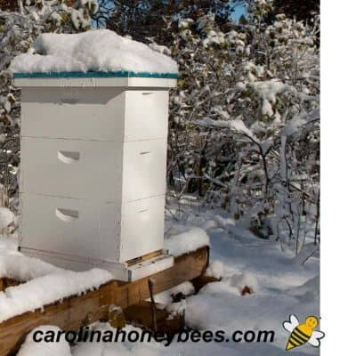 beehive in winter snow well fed for winter