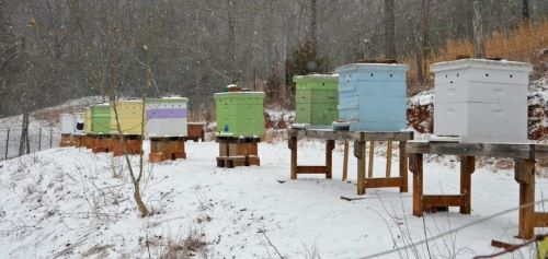 winter bees in snow